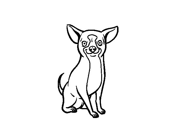 A chihuahua dog coloring page