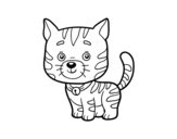 A domestic cat coloring page