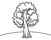 A field maple coloring page