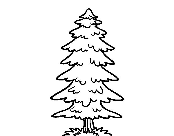 A fir coloring page