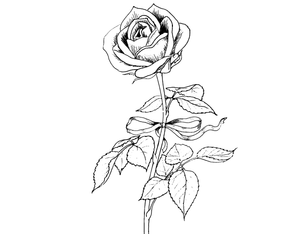Rose Coloring Pages 2 Pictures to pin on Pinterest