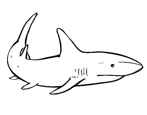 A shark swimming coloring page