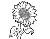 A sunflower coloring page
