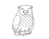 Adult owl coloring page