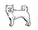 Akita Dog coloring page