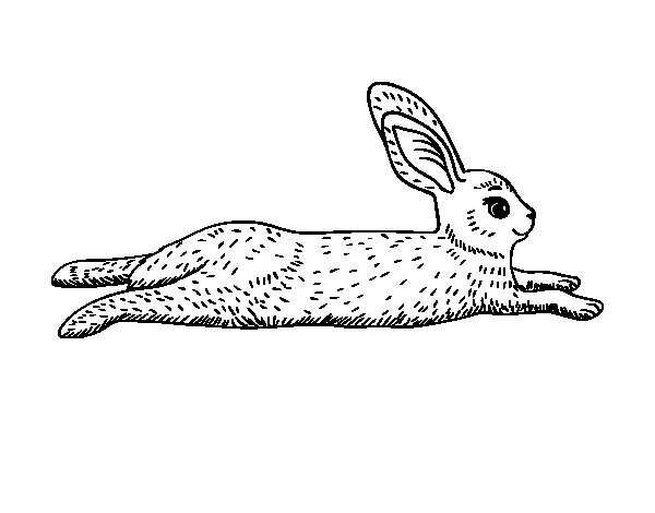 An hare coloring page