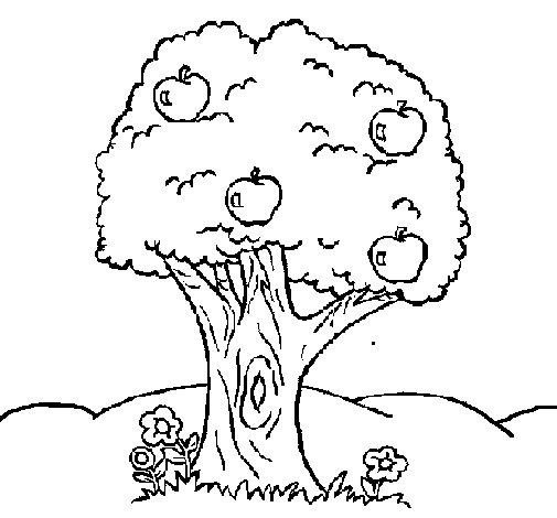 Apple tree coloring page Coloringcrewcom