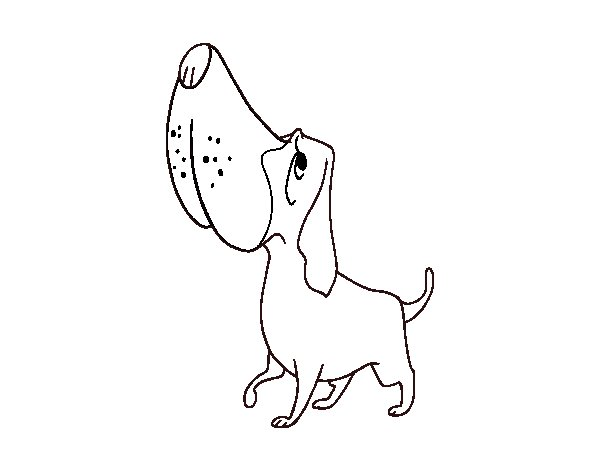 dog basset coloring pages - photo#13