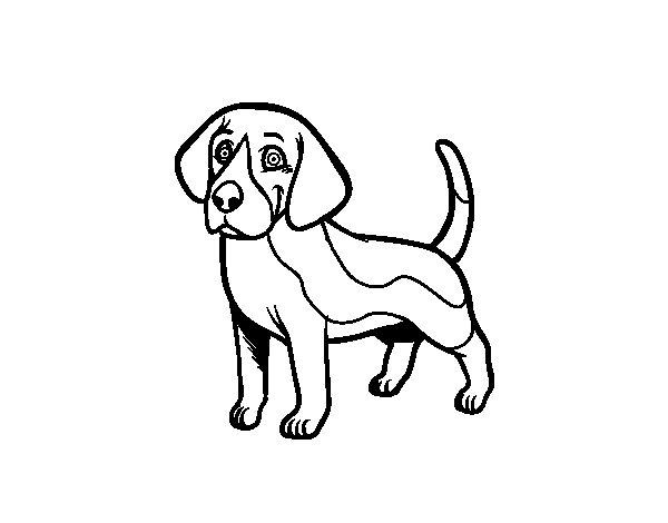 Beagle dog coloring page