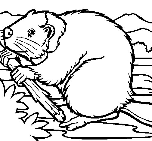 Beaver 1 coloring page