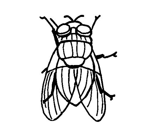 Black fly coloring page