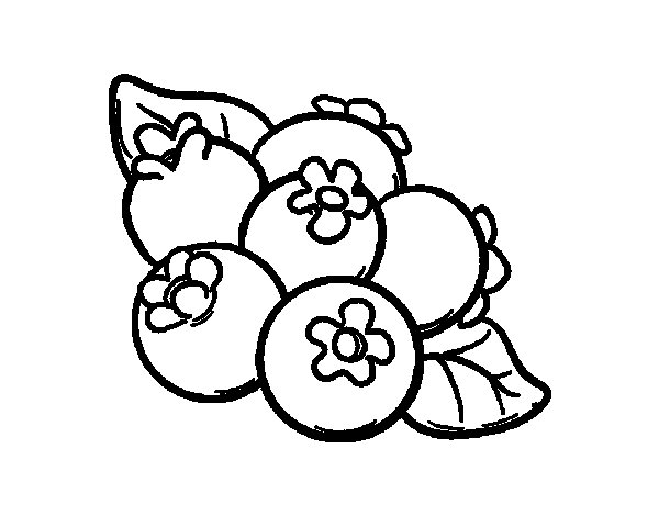 blueberries coloring page coloringcrew