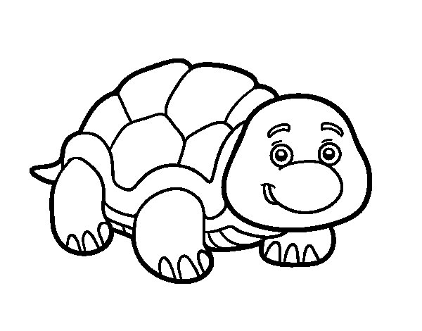 Box turtle coloring page