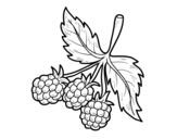 Branch of raspberries coloring page