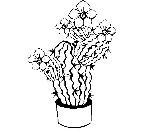Cactus flowers coloring page
