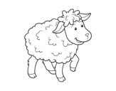 Common Sheep coloring page