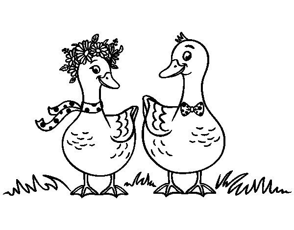 Couple of ducks coloring page
