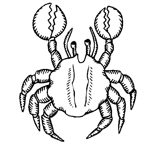 Crab with large pincers coloring page