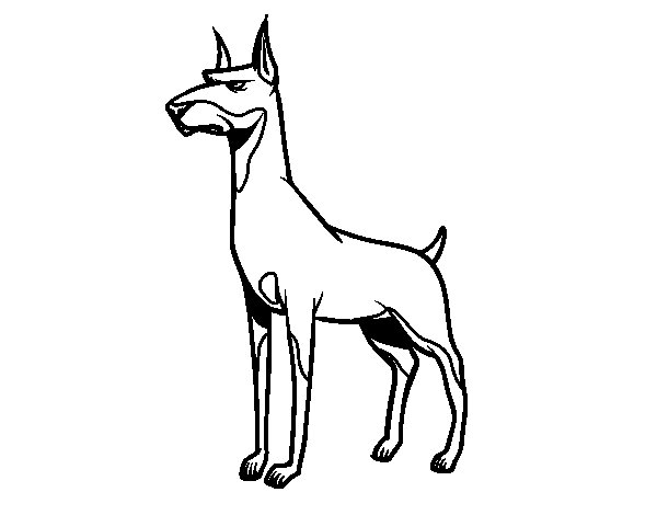 Doberman dog coloring page
