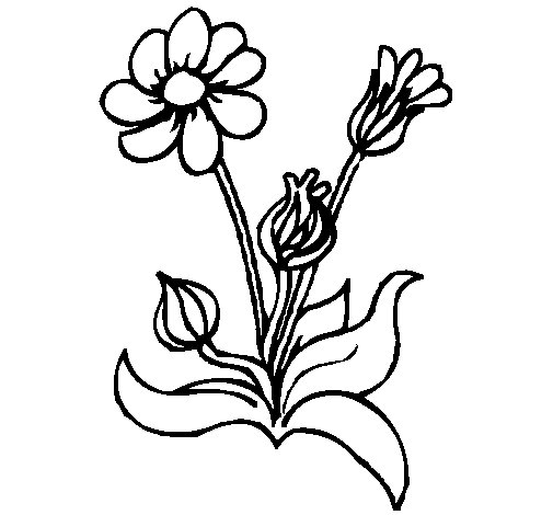 Flowers 2 coloring page