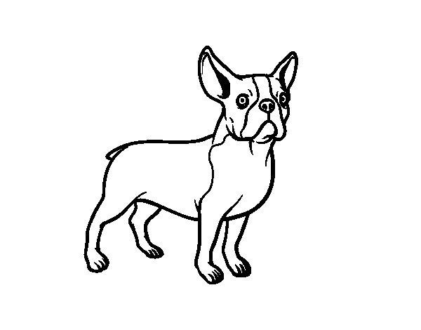 French Bulldog Dog Coloring Page