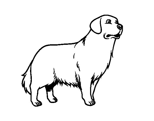 Golden Retriever Coloring Pages To Print