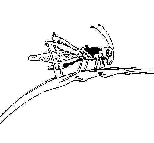 Grasshopper on branch coloring page