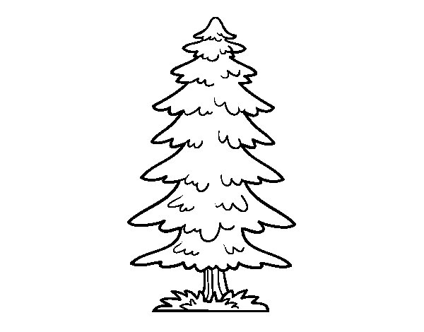 Great fir tree coloring page