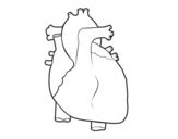Human heart coloring page