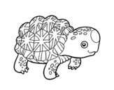 Dibujo de Indian star tortoise