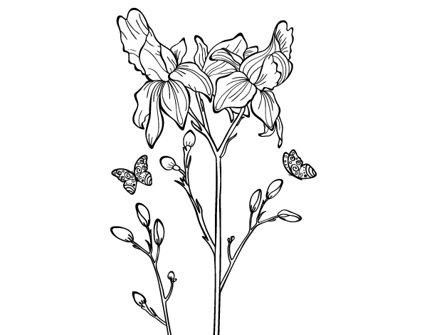 Free Coloring Pages Of Iris Flower