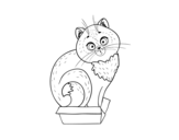 Kitten in a box coloring page