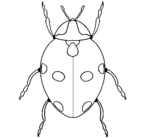 Ladybird 3 coloring page