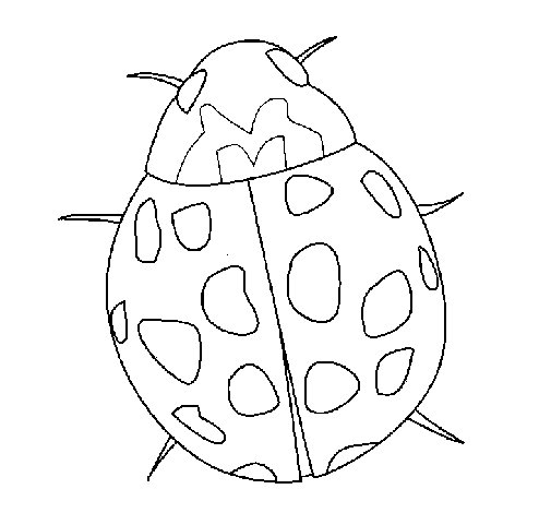 Ladybird coloring page