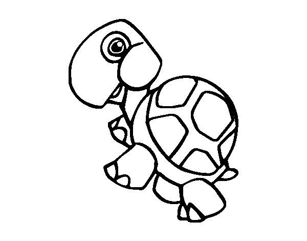 Land turtle coloring page
