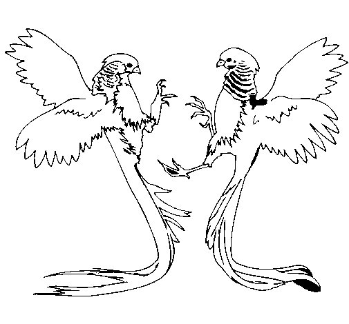 Long Tailed Birds Coloring Page