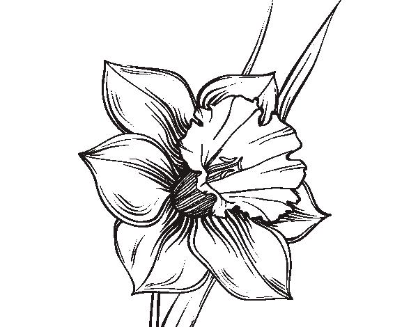 poem Daffodils by William Wordsworth  dltkholidayscom