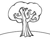Oak coloring page