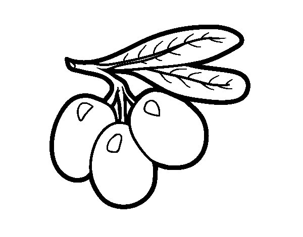 olive branch coloring page