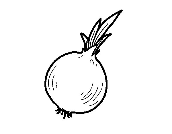 Organic onion coloring page