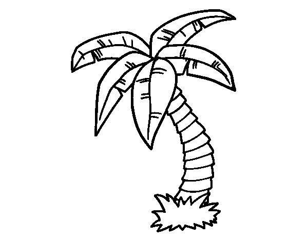 Palm tree coloring page  Coloringcrewcom