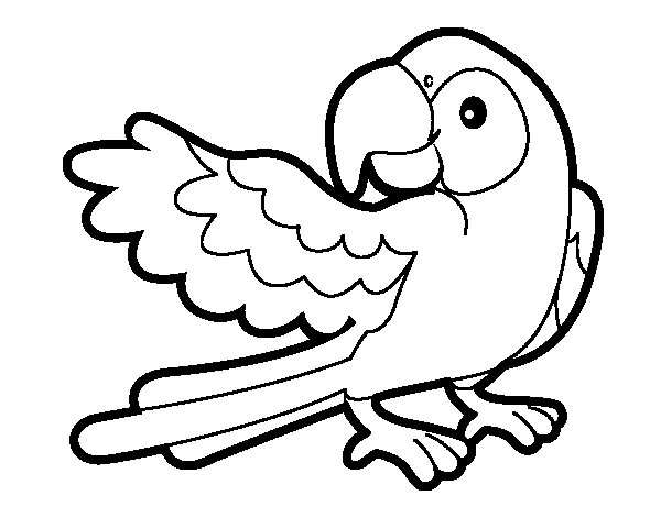 Parrot with wideout coloring page