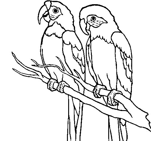 Parrots coloring page