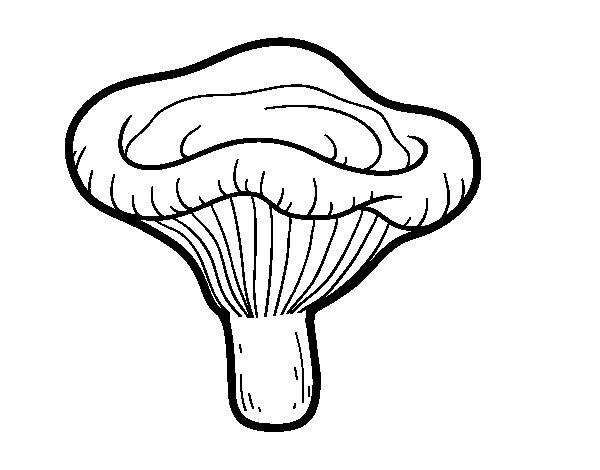 Paxillus involutus mushroom coloring page