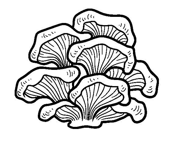 Pleurotus mushrooms coloring page