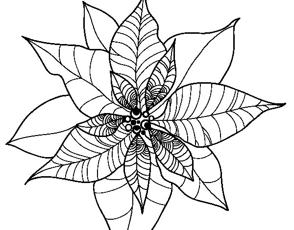 Poinsettia flower coloring page