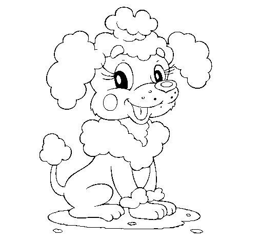 Poodle coloring page Coloringcrewcom