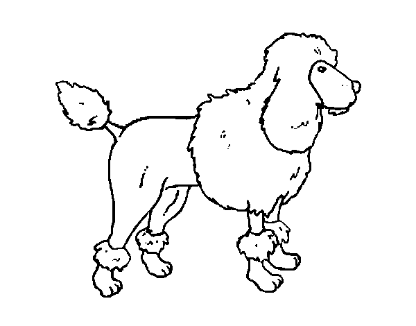 poodle puppy coloring pages photo16