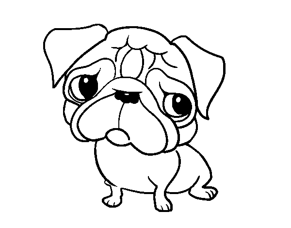 Pug coloring page Coloringcrewcom