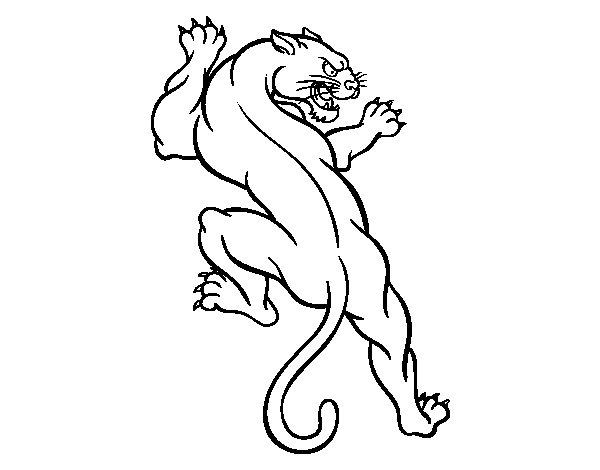 Puma tattoo coloring page Coloringcrew